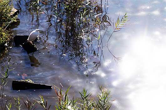 川にいる鳥