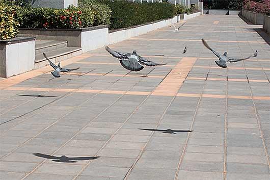 バンガロール 羽ばたく