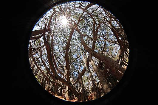 バンガロール ビッグ バンヤンツリー