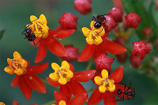 バンガロール 蟻と花