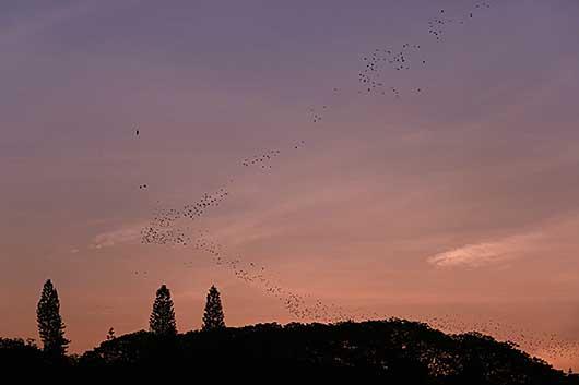バンガロール 渡り鳥