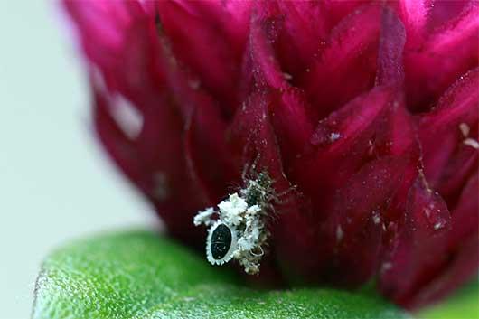 バンガロール 花粉をまとった虫