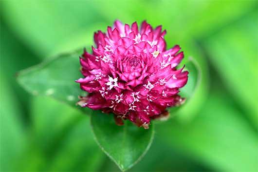 バンガロール 花