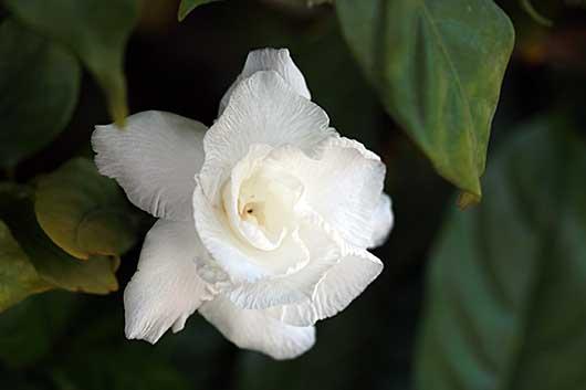 バンガロール オフィスの周りの花