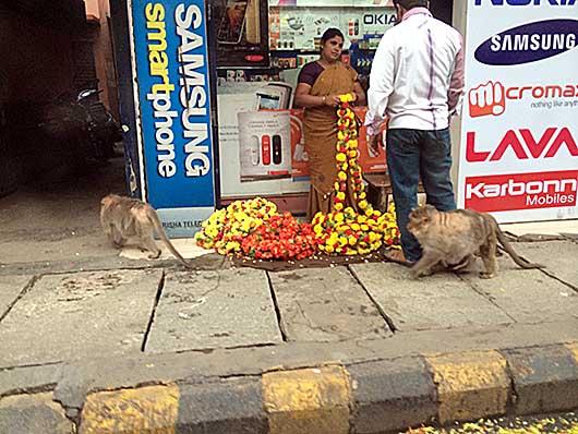 バンガロール 歩道を歩く猿