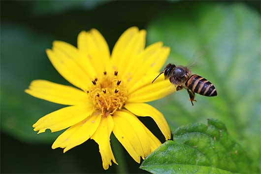 バンガロール 飛んでいる蜂