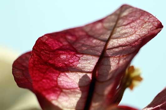 バンガロール アパートに咲く花