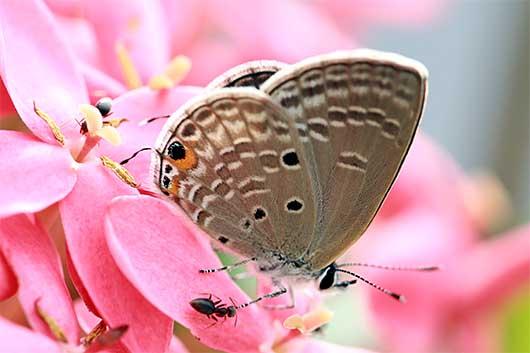 バンガロール 蝶と蟻
