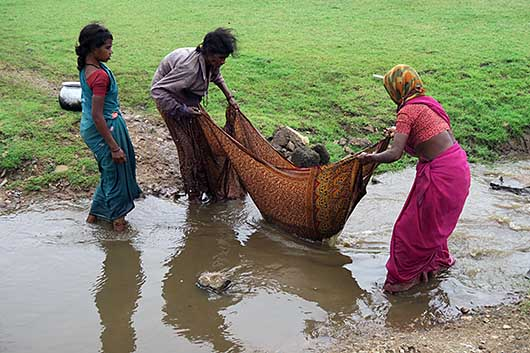インド Kabini 漁