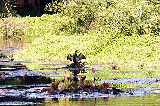 鳥 @ The Leela Goa